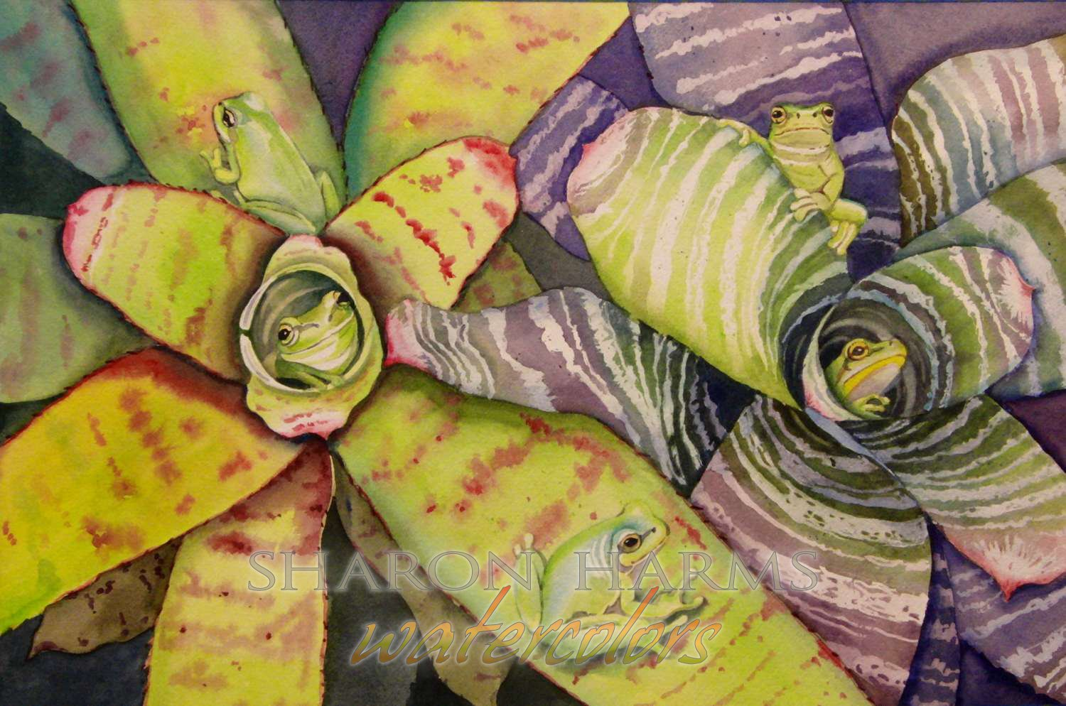 Frogs in Bromeliads