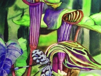 Jack in Pulpits