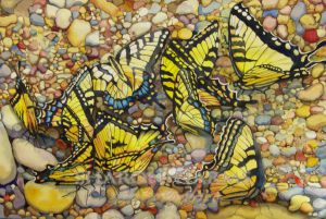 tiger-swallowtails