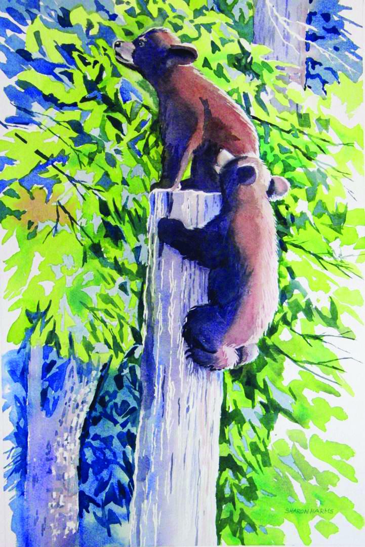 Bear cubs climbing