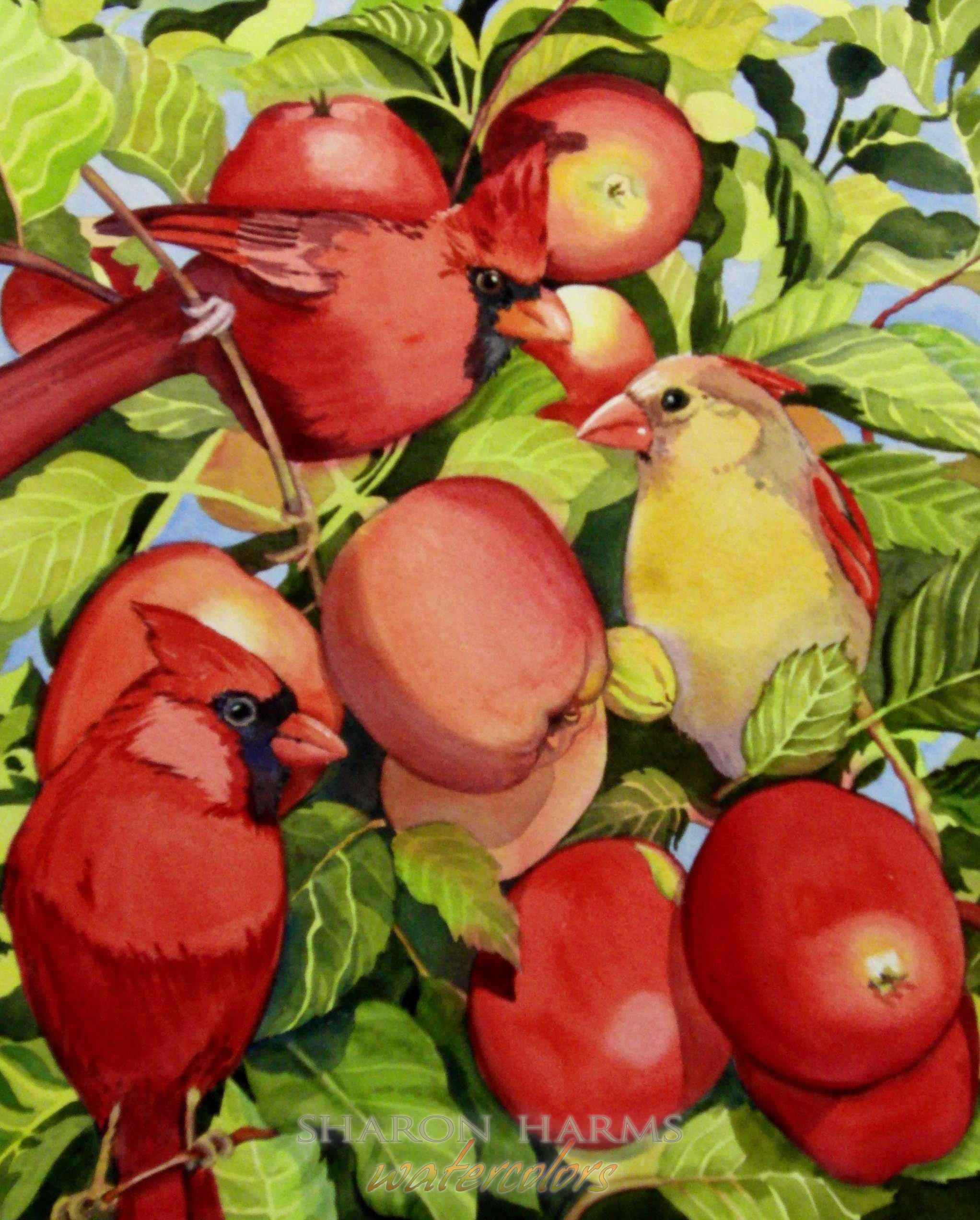 Cardinals in Apple Tree