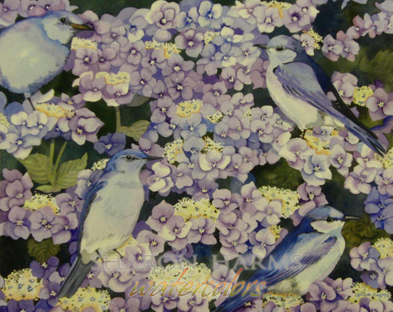 Hydrangea and Mountain Bluebirds
