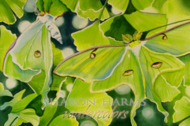 Luna Moths in Ginkgo Tree