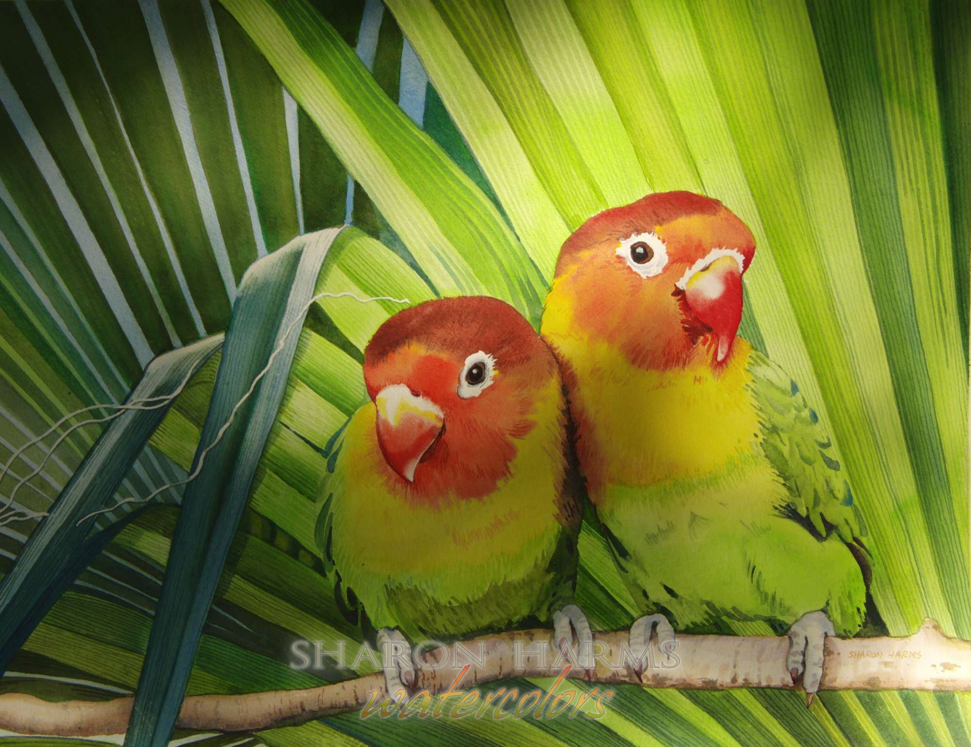 Peach Face Love Birds