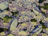 Hydrangea and Mountain Bluebirds