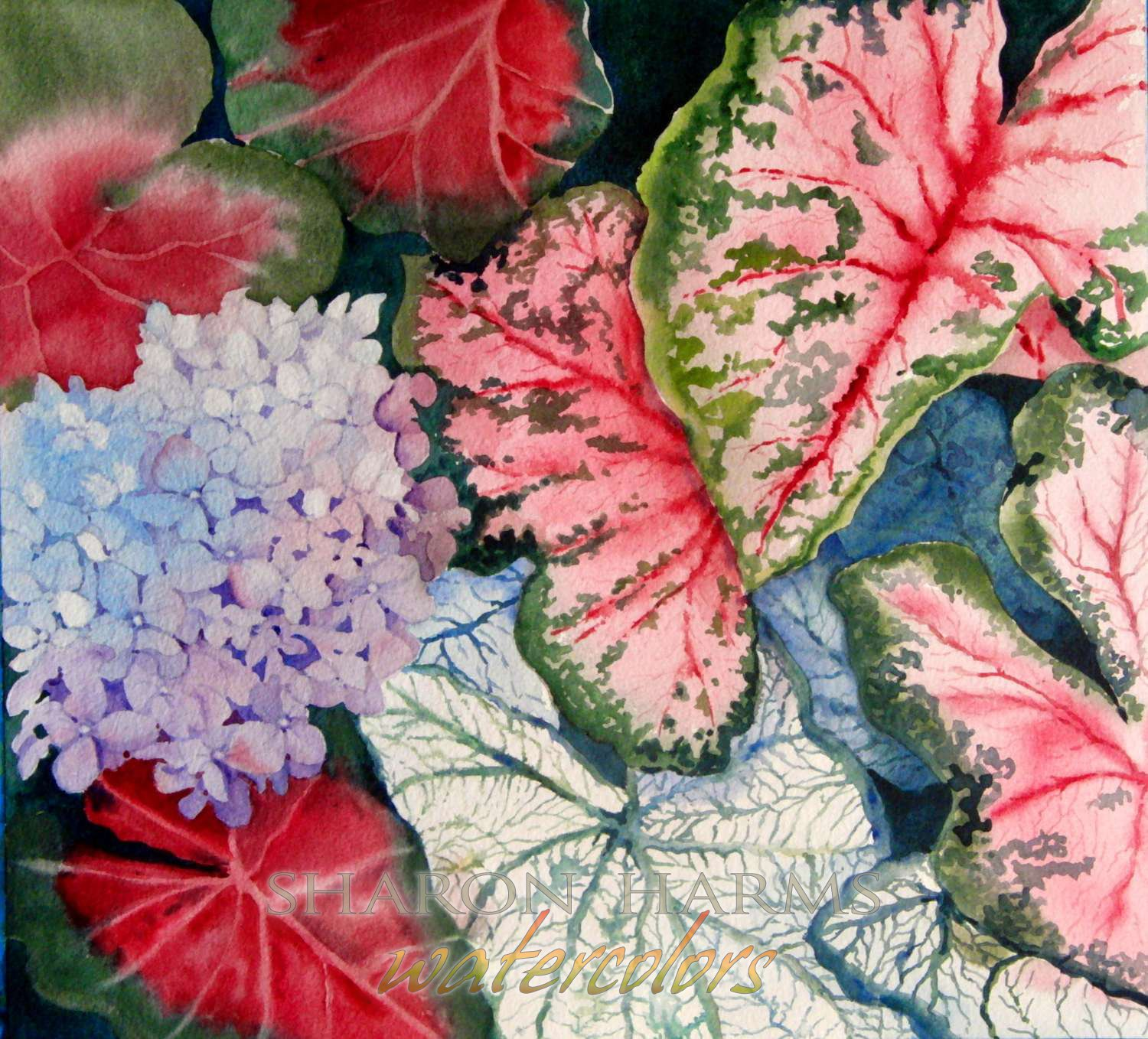 Caladium and Hydrangea